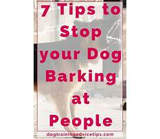 How to stop nuisance dog barking Plan