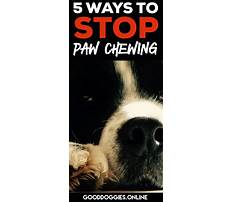 How to stop puppy from biting feet Plan
