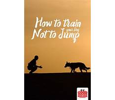 How to train a dog not to bark at everything Plan