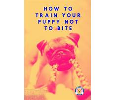How to train a dog not to bite Plan