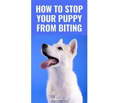 How to train a dog to stop biting Plan