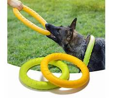 How to train a puppy not to chew and bite Plan