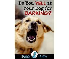 How to train a puppy to not bark Plan