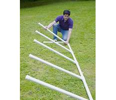 How to train an older dog Plan