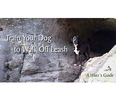 How to train an older dog to walk off leash Plan