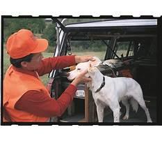 How to train bird dogs.aspx Plan