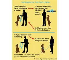 How to train dog dancing Plan