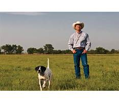 How to train dog dor kennel.aspx Plan
