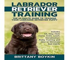 How to train labrador retriever to hunt.aspx Plan