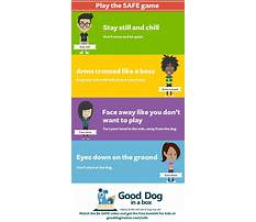How to train my puppy to not bite Plan