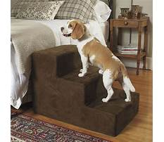 How to train your dog to search for things.aspx Plan
