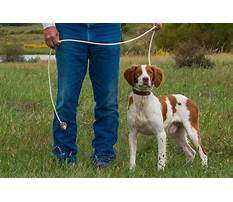 How to train your dog to search your house.aspx Plan