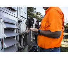 How to training a dog.aspx Plan