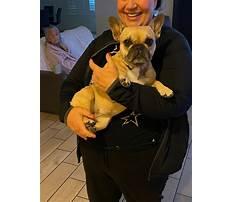Hunters dog training cave creek.aspx Plan