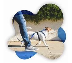 In home dog training canton ohio.aspx Plan