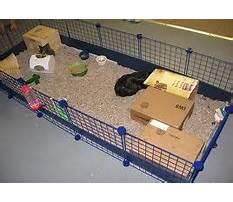 Indoor guinea pig run Plan