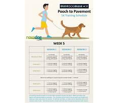 John suits dog training Plan