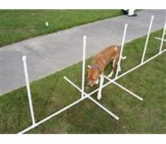 Johnny miller dog training Plan