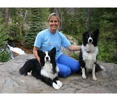 Joni johnson godsy dog training Plan