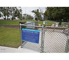 Joondalup dog agility training Plan