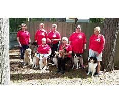 Judy strickland dog training.aspx Plan