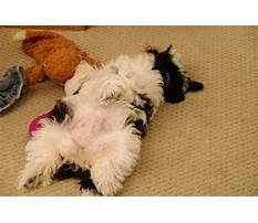 Just say it once dog training Plan