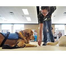 Kansas city therapy dog training.aspx Plan