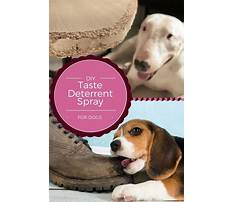 Keep dog from biting Plan