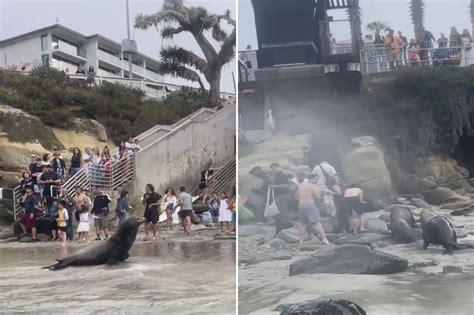 Jolla Beach San Diego