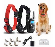 Large dog training collar reviews.aspx Plan