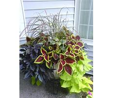 Large planter ideas full sun Plan