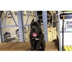 Lehigh valley dog training bethlehem pa.aspx Plan