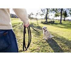 Long line for dog training.aspx Plan