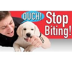 Make dog stop biting Plan