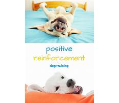 Negative punishment dog training Plan