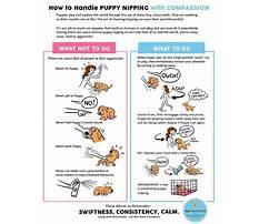 Nipping puppy training Plan