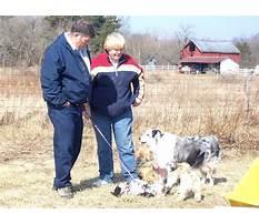 Pat muller dog training Plan