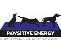 Pawsitive energy dog training.aspx Plan