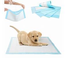 Pee pad trained dog peeing on carpet.aspx Plan