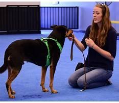 Pet dog training instructors Plan