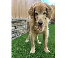 Pets at home dog training.aspx Plan