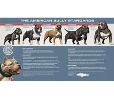 Pitbull dog training classes.aspx Plan