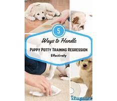 Potty training regression dog.aspx Plan