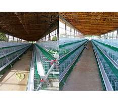 Poultry cages prices in kenya Plan