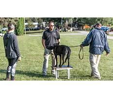 Professional dog training schools near me.aspx Plan