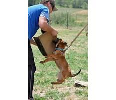 Protection dog training brisbane Plan