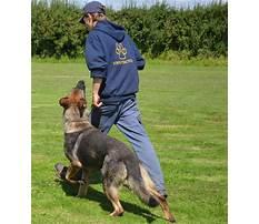 Protection dog training courses uk Plan