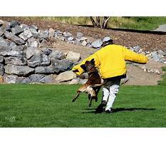 Protection dog training in michigan Plan