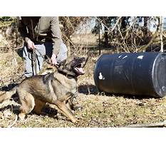 Protection dog training ontario Plan