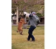 Protection dog training san antonio Plan